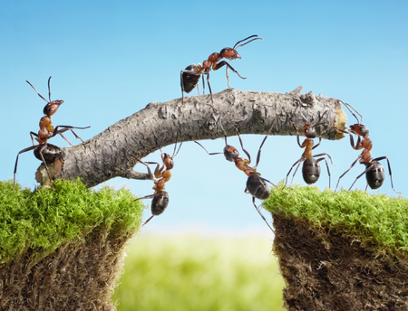 Ants Working Blog 3
